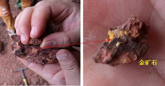 阳光创译-矿石中的明金颗粒(大小2mm)